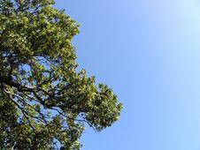 Free Green Tree Stock Photo - 16013090