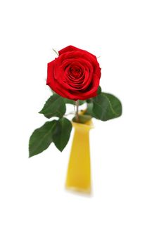 Free Red Rose In Yellow Vase Stock Images - 16013134