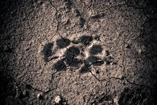 Free Animal Footprint Stock Photos - 16013273