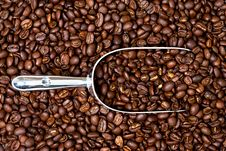 Free Coffee Beans And Scoop Royalty Free Stock Photos - 16014478