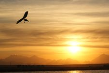 Free Flight To The Sun Stock Photography - 16014732