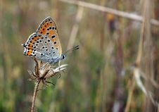 Free Butterfly Stock Image - 16015371