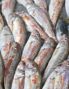 Free Raw Red Mullet Royalty Free Stock Image - 16015686