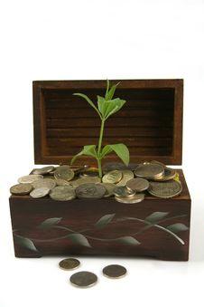 Free Green Plant Stock Image - 16015781