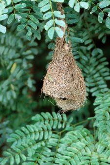 Free Baya Nest Stock Images - 16016124