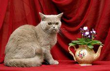 Free Flower Tea Royalty Free Stock Photo - 16017175