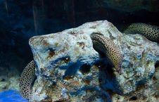 Free Moray-eel Sleep In The Stone Stock Photos - 16017273