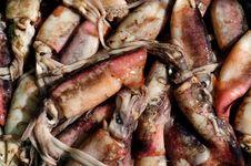 Free Squid Stock Photos - 16018013