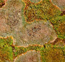 Free Lichen Stock Image - 16018881