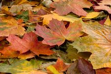 Free A Colorful Image Of Fallen Autumn Leaves Royalty Free Stock Image - 16018906