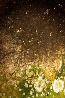 Free Moss Stock Photo - 16019220
