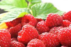 Free Ripe Red Raspberries Stock Photo - 16019960