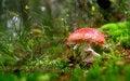 Free Red Mushroom Stock Image - 16021111