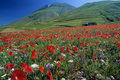 Free The Poppies And The Mountain Royalty Free Stock Photos - 16029508