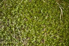 Free Forest Moss Stock Photos - 16020033