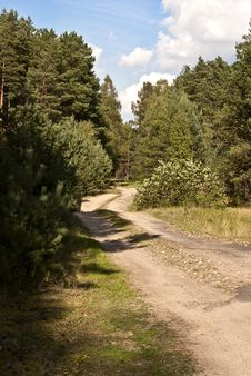 Free Forest Road Royalty Free Stock Images - 16020309