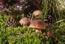 Free Mushrooms Stock Photos - 16021343