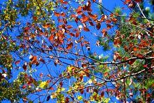 Free Autumn Trees Stock Photo - 16021810
