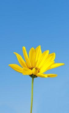 Autumn Flower Rudbeckia Stock Photography
