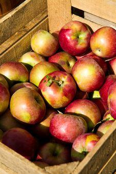 Free Crate Of Apples Vertical Stock Images - 16024464