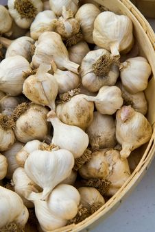 Basket Of Garlic Bulbs Royalty Free Stock Photo
