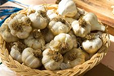 Garlic Bulbs Stock Photography