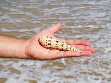 A Hand Holding A Seashell Stock Images