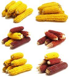 Free Fresh Corn Stock Photography - 16027452