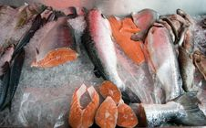 Free Fresh Fish On Ice Counter Royalty Free Stock Image - 16028516