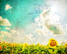 Free Sunflower Field Royalty Free Stock Image - 16029406