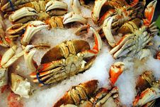 Free Dungeness Crabs Royalty Free Stock Image - 16031906