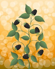 Free Floral Background With A Blackberry Stock Photos - 16032873