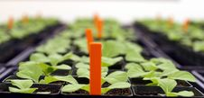 Free Greenhouse Stock Photo - 16033260