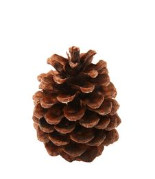 Free Pine Cone Over White Background Stock Images - 16033944