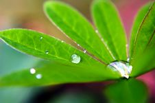 Free Macro Drops Of Water Stock Photo - 16033960