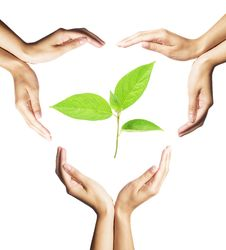 Free Green Plant Surrounded By Hands On White Stock Image - 16034191