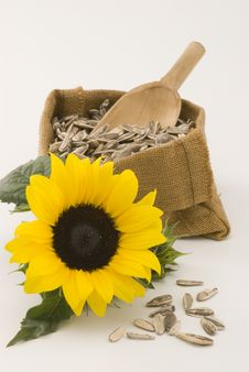 Free Sunflower. Stock Images - 16035784