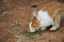 Free Rabbit Royalty Free Stock Photos - 16036998