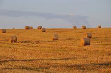 Free Grain Field Stock Image - 16037451