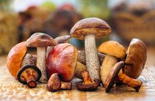 Free Many Species Of Mushrooms Royalty Free Stock Images - 16037509