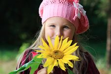 Free Sunflower Stock Photography - 16037762