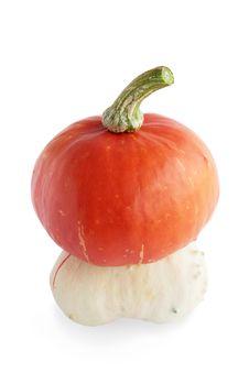 Hybrid Pumpkin Royalty Free Stock Photo