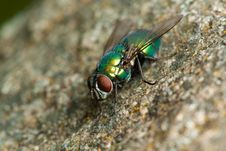 Free Fly On The Stone Royalty Free Stock Image - 16039246