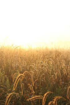 Free Dew Cover Grass And Neutral Background Royalty Free Stock Images - 16039599