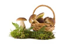 Free Boletus Mushrooms In And Out The Basket Stock Photography - 16039682