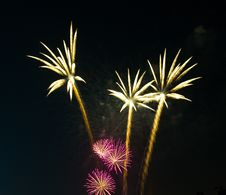 Free Fireworks As Palm At Night Royalty Free Stock Image - 16040866