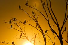 Free Cormorants In Tree Stock Photos - 16042063