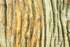 Free Grains On Old Stump Stock Image - 16042241