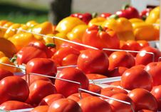 Free Tomatoes Royalty Free Stock Images - 16042479