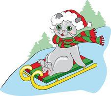 Free Grey Cat On Sledge Stock Images - 16043144